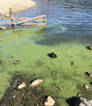 WARNING: Blue-green algae. Picture: Environment Agency