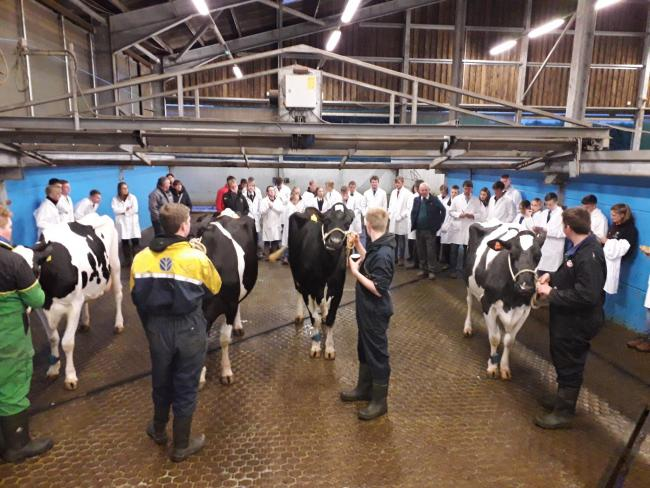 YFC Stockjudging competition at Newton Rigg College in Penrith