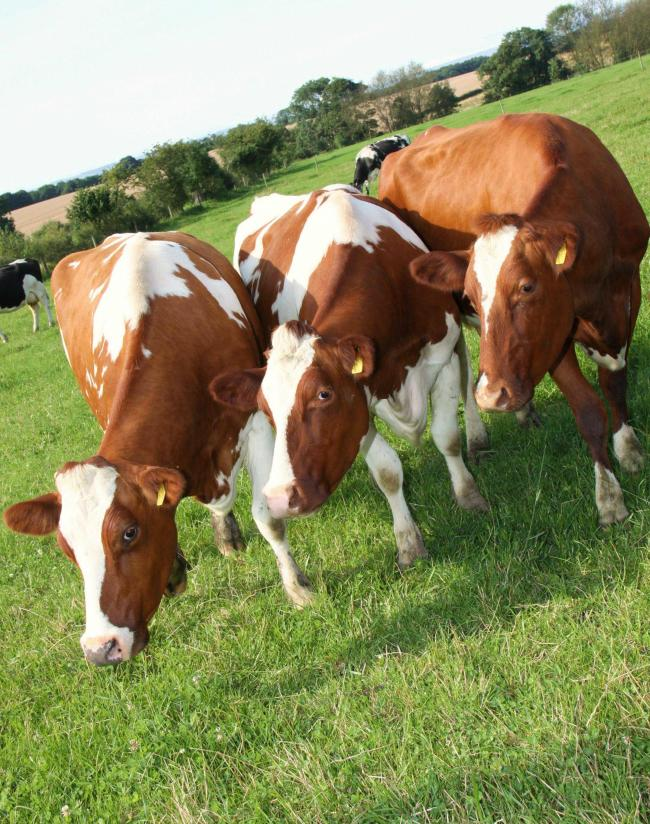Get your vet to carry out a mastitis plan