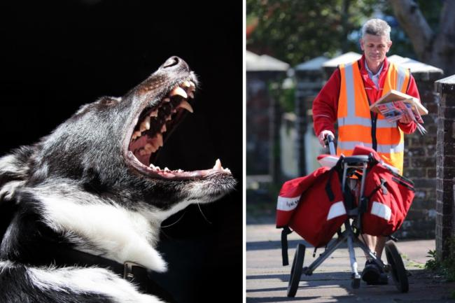 Royal Mail say dog owners could face 5 YEARS in prison if their pet bites a postal worker. Pictures: Newsquest