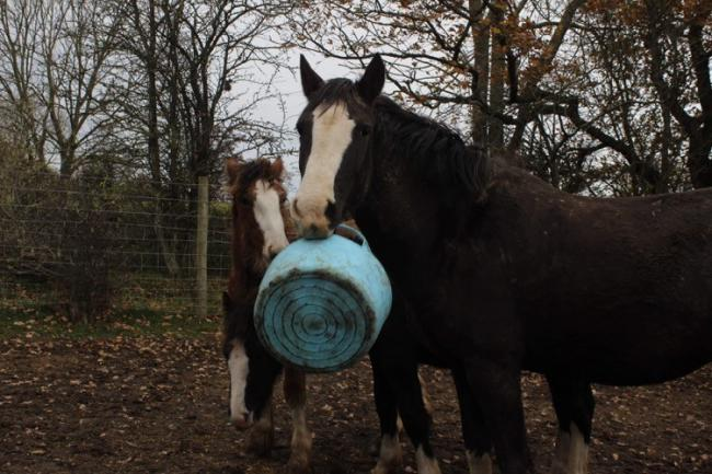 "FOAL play: Oaktree Tree Animals' Charity, in Wetheral, say that new residents Cosmo and Daisy are coming on in ""leaps and bounds"" and are ""very well behaved"". Both can be sponsored as part of the charity's effort to raise funds"