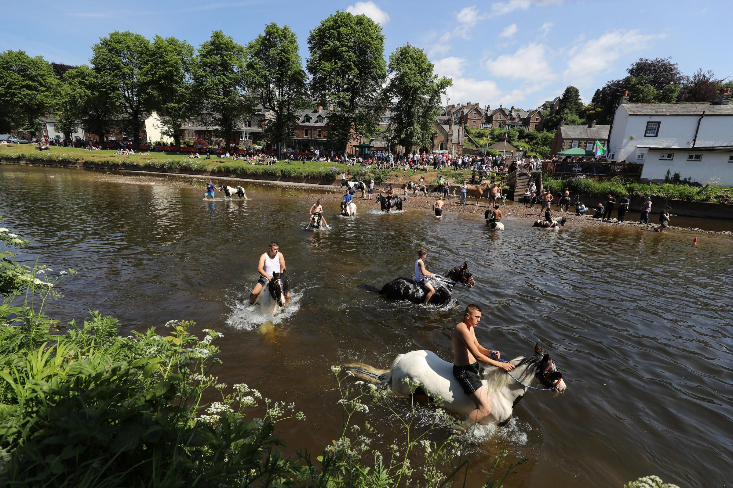 Horses are washed in the river Eden during the Horse Fair in Appleby